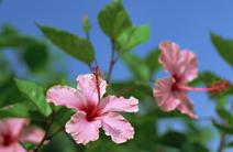 沖縄県民プラン